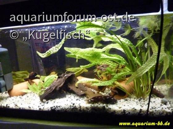 """mein neues Aquarium, nach der """"Renovierung"""""""