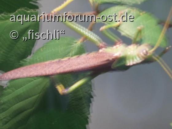 kölner_zoo_terrarium_5