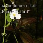 Ableger und Blüten 2