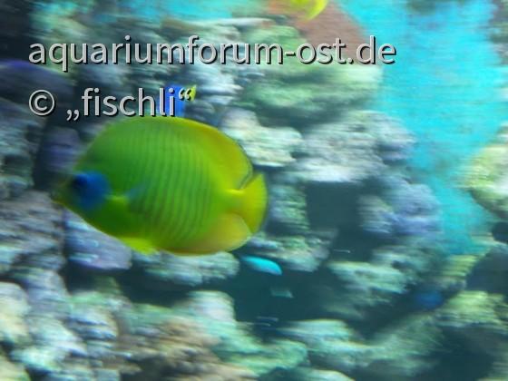 zooaquarium_köln_12
