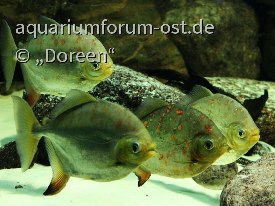 Zoo Aquarium